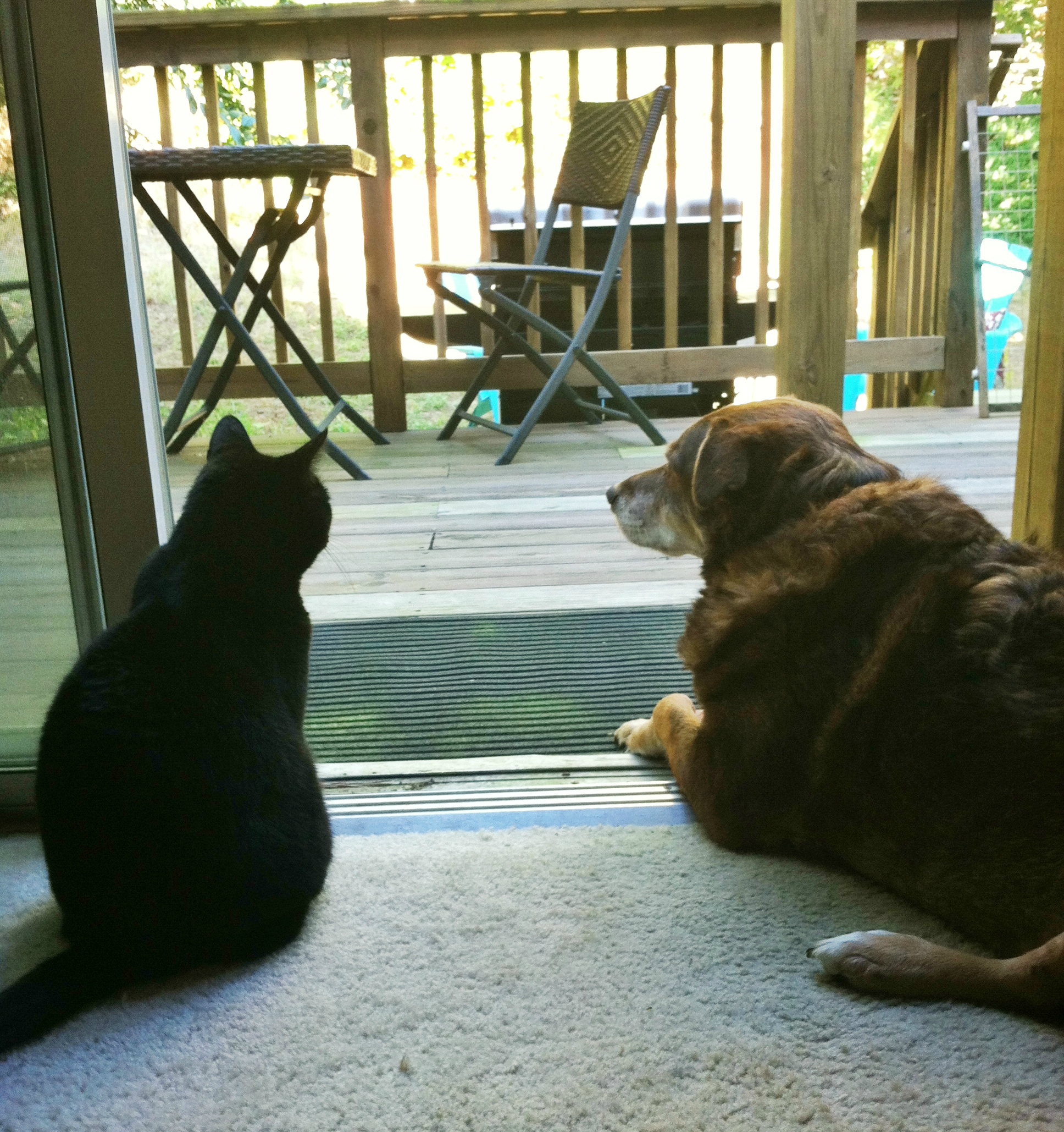 Coco and Bella watching the deck