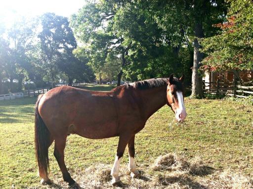CW Horses