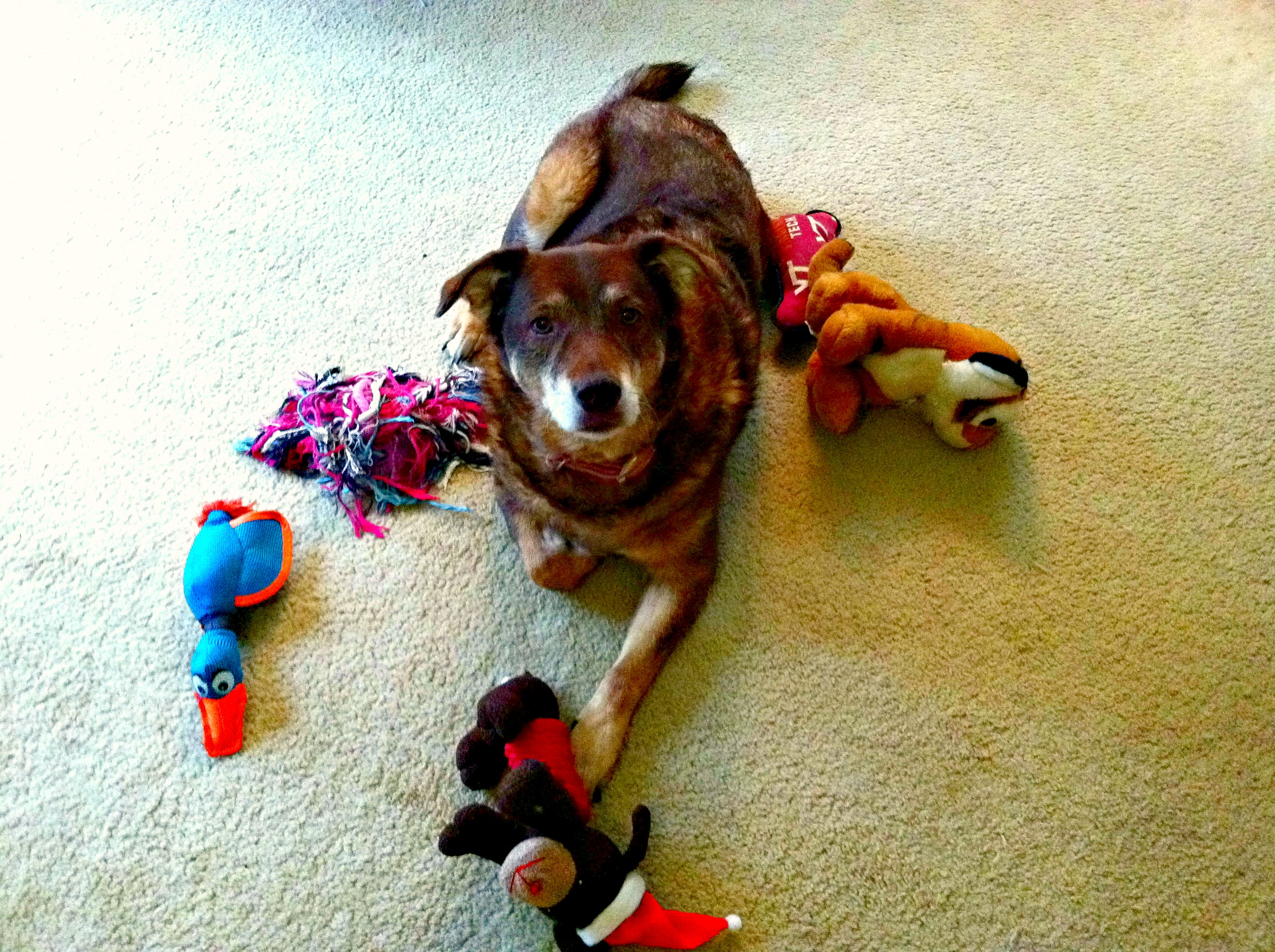 Bella with her toys