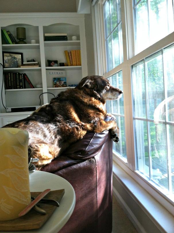 Bella on perch