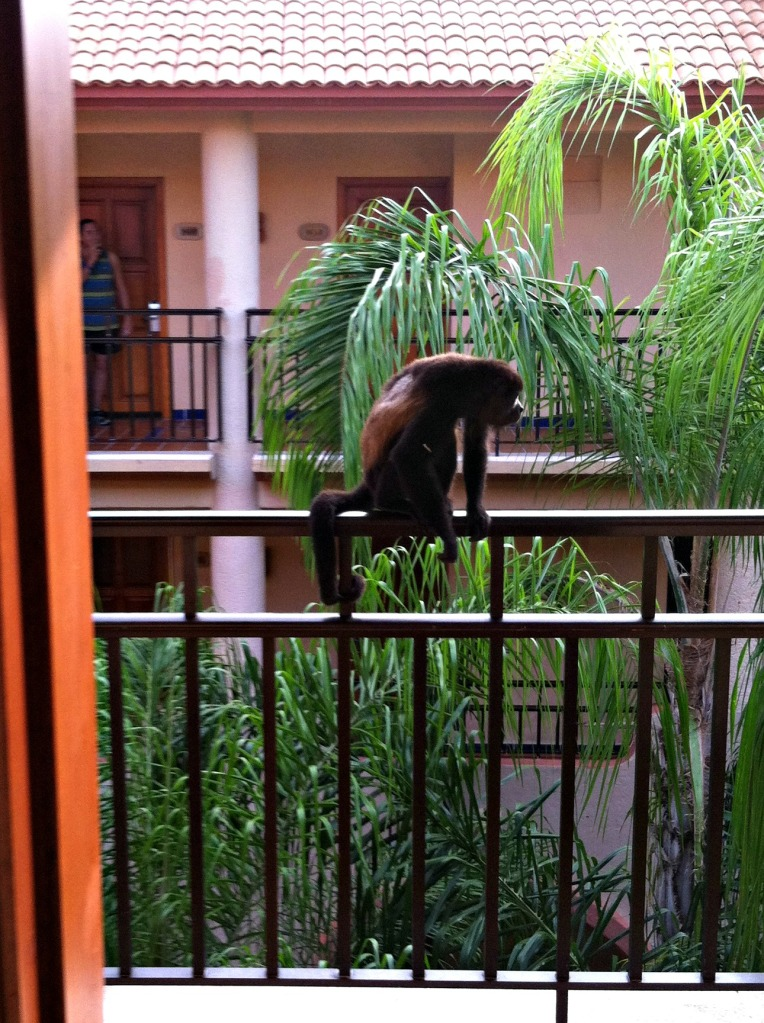 Howler monkey on railing